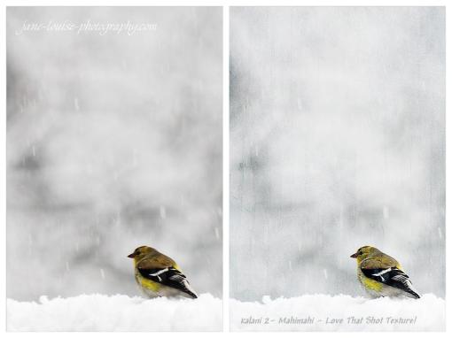 Finch in a Snowstorm