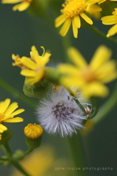 2014 Butterfly Garden 035JLP