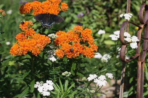 2014 Swallowtail&BeesJH