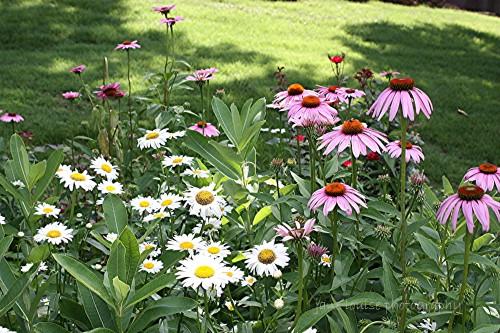 2015 June Butterfly Garden 005JLP