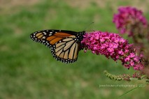 Monarch 0024JLP
