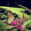 monarch JLP 8-25