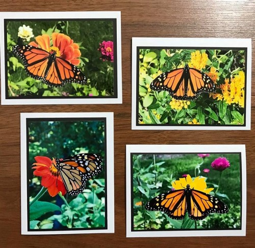 monarch note cards JLP